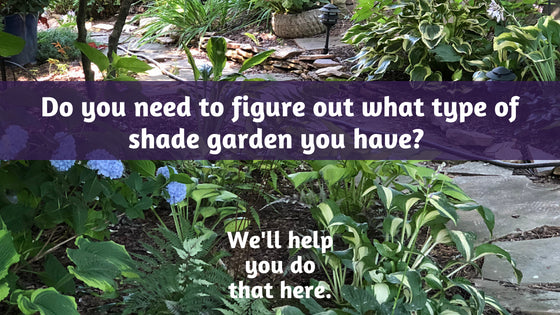 Let's Talk About Shade Gardening