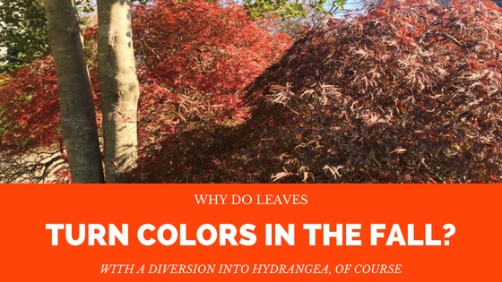 Why do Leaves Turn Colors in the Fall?