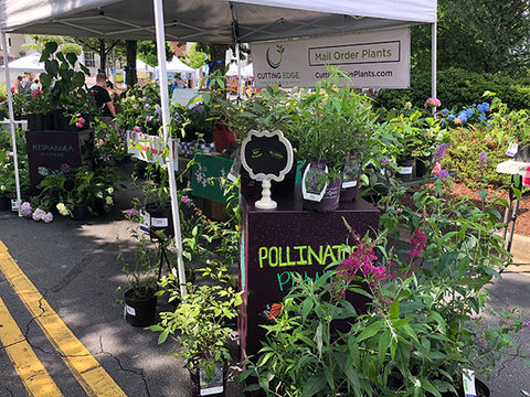 Picture of our booth at the Penny McHenry Hydrangea Festival