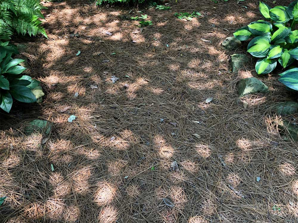 picture of a dappled shade garden