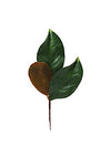 "Magnolia Foliage Pick - 14"" Tall - Set of 36 - Green"