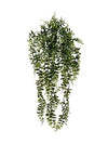 "Buckler Fern Hanging Plant - 25"" Long - Set of 12 - Green"