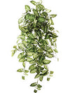 "Nephthytis Hanging Plant - 38"" Long - Box of 6 - Variegated Green"