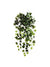 "Mini English Ivy Hanging Plant - 19"" Long - Box of 6 - Green"