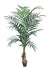 Kentia Palm Tree - 6' Tall - Box of 2 - Green
