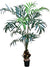 Kentia Palm Tree - 7' Tall - Box of 2 - Green