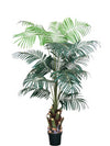 Wine Palm Tree - 7' Tall - Box of 2 - Green