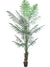 Wine Palm Tree - 8' Tall - Box of 2 - Green
