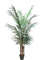 Areca Palm Tree - 6' Tall - Box of 2 - Green