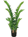 "Zamifolia Plant - 43"" Tall - Set of 2 - Green"