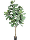 Fiddle-Leaf Fig Tree - 7' Tall - Box of 2 - Green