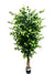 Ficus Tree - 6' Tall - Box of 2 - Green