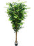 Ficus Tree - 7' Tall - Box of 2 - Green