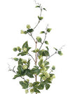 "Hop Flower Branch Spray - 47"" Tall - Box of 6 - Green"