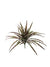 "Spider Grass Bush - 19"" Tall - Box of 24 - Choice of Color"
