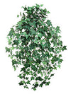 "Mini English Ivy Hanging Plant - 33"" Long - Box of 12 - Green"
