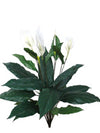 "Spathiphyllum Plant - 30"" Tall - Set of 6 - White"