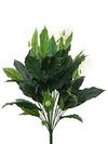 "Spathiphyllum Plant - 35"" Tall - Set of 6 - White"