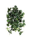 "English Ivy Hanging Plant - 24"" Long - Box of 12 - Green"