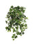 "Grape Ivy Hanging Plant - 24"" Long - Box of 12 - Green"