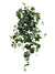 "English Ivy Hanging Plant - 33"" Long - Box of 6 - Green"