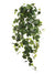 "Grape Ivy Hanging Plant - 33"" Long - Box of 6 - Green"