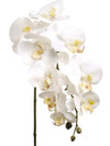 "Phalaenopsis Orchid Stem - 29"" Tall - Set of 12 - Choice of Color"