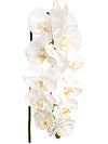 "Phalaenopsis Orchid Stem - 37"" Tall - Set of 12 - Choice of Color"