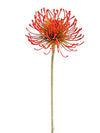 "Protea Pincushion Stem - 26"" Tall - Set of 12 - Orange"