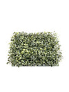 "Glossy Boxwood Square - 12"" Square - Set of 12 - Green"