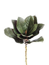 "Magnolia Foliage Pick - 18"" Tall - Set of 12 - Green"