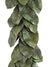 Magnolia Foliage Garland - 5' Long - Green