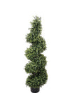 Boxwood Topiary Wide Spiral - 4' Tall - Green