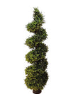 Boxwood Topiary Wide Spiral - 5' Tall - Green