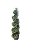 Cedar Topiary Spiral - 4' Tall - Green