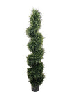 Cedar Topiary Spiral - 5' Tall - Green