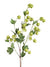 "Hop Flower Branch Spray - 39"" Tall - Box of 12 - Green"
