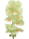 "Phalaenopsis Orchid Stem - 31"" Tall - Box of 12 - Choice of Color"