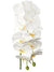 "Phalaenopsis Orchid Stem - 41"" Tall - Box of 6 - Choice of Color"