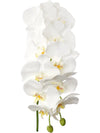 "Phalaenopsis Orchid Stem - 41"" Tall - Set of 6 - Choice of Color"