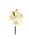 "Cymbidium Orchid Pick - 10"" Tall - Set of 12 - White"