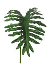 "Philo Selloum Leaf - 46"" Tall - Box of 6 - Green"