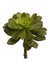 "Aeonium Succulent - 8.5"" Tall x 6"" Diameter - Box of 6 - Green"