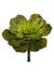 "Aeonium Succulent - 8"" Tall x 7.5"" Diameter - Box of 12 - Green"