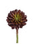 "Sempervivum Succulent - 8"" Tall x 4"" Diameter - Box of 12 - Burgundy"