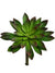 "Sempervivum Succulent - 8"" Tall x 8"" Diameter - Box of 12 - Green"