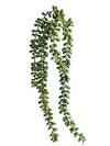 "Senecio Succulent - 16.5"" Long - Box of 12 - Choice of Color"
