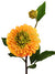 "Dahlia Spray - 24"" Tall - Box of 12 - Choice of Color"