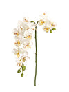 "Mini Phalaenopsis Orchid Stem - 22"" Tall - Set of 12 - Choice of Color"