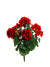 "Geranium Bush - 18"" Tall - Box of 12 - Red"